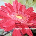 diane-marcotte-red-gerbana-daisy-3-2